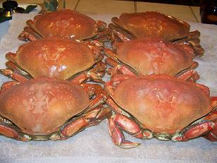 Dungeness Crab by Crab-O-Licious.com