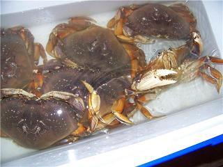 Keeping Crab Alive