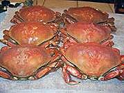 boiled-dungeness-crab